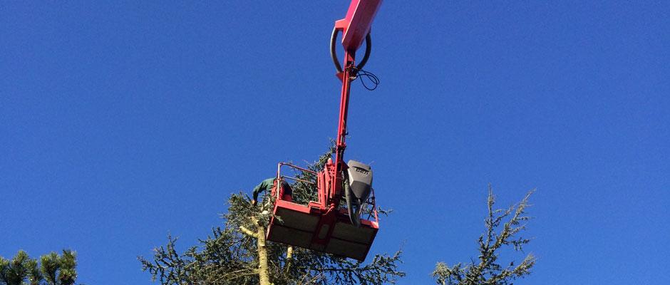 Baumpflege & Baumschnitt in Kiel und Umgebung